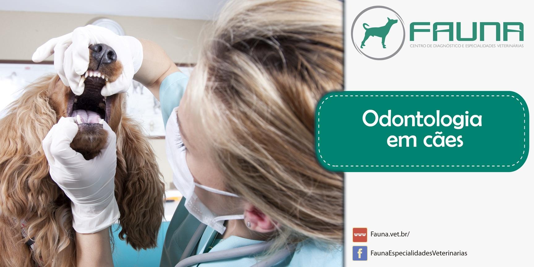 Odonto (1)